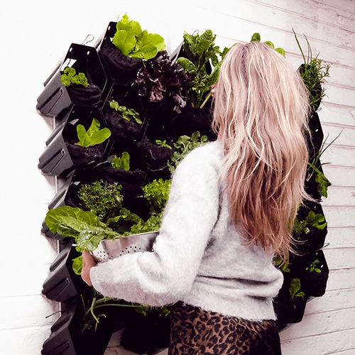 Vertical Garden by Vicinity Innovation - With Misha Levin